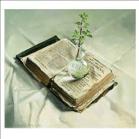Kunstkaartje Nieuw Leven